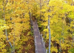 Autumn-walkway