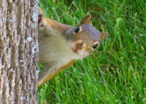 Karstens Pic of Red Squirrel